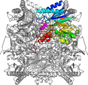 The overall structure of FBPA/P.