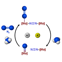 habers development of a method for synthesizing ammonia using atmospheric nitrogen Enhancing the rate of electrochemical nitrogen reduction reaction for ammonia synthesis under ambient conditions using hollow gold nanocages.