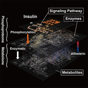 Graphical abstract from Yugi et al. (2014) Cell Reports (CC BY 3.0). A global molecular network of metabolic regulation by insulin underlying across the protein phosphorylation layer and metabolite layer. The trans-omic analysis, a methodology developed in this study, enabled the reconstruction of the entire landscape of the global network of insulin regulation of metabolism that could have been only guessed at from a patchwork of partial knowledge.