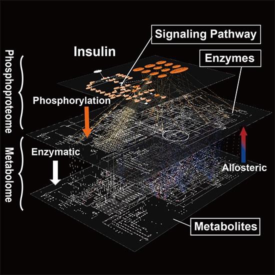 Molecular Network Identified Underlying >> Reconstruction Of Molecular Network From Cellular Big Data The