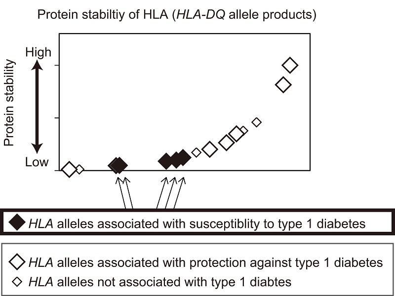 genes encoding hla antigens Hla and infectious diseases classical human leukocyte antigen (hla) diagrammatic view of the locations of genes encoding classical hla class i (hla-a,.