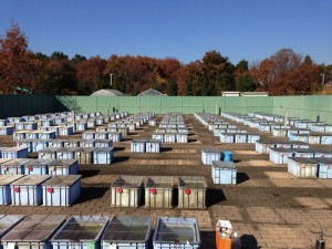 Outdoor breeding facility that keeps medaka geographical populations, in Kashiwa campus, the University of Tokyo.