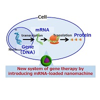 A new system of gene therapy using messenger RNA (mRNA)