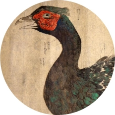 Aves Japonicae 2 – Specimens on Paper