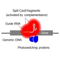 Editing the genome with light