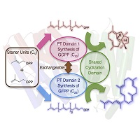 Novel compounds synthesis strategy with the chimera enzyme