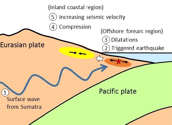 © 2016 Kazushige Obara.Shallow normal faulting earthquakes are triggered by surface waves from the Sumatra earthquake, inducing crustal extension that results in compressional strain further inland, resulting in increased compressional strain and seismic velocity.