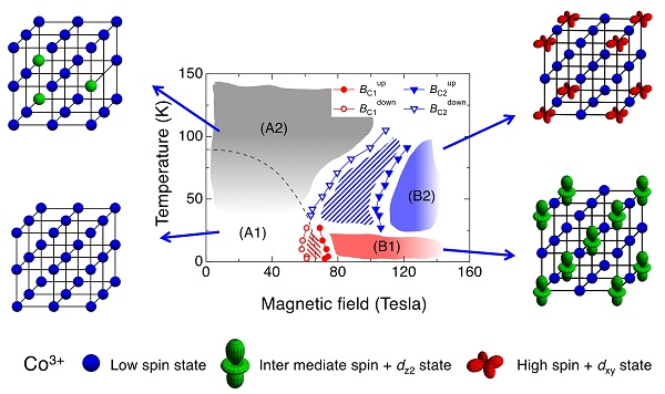 © 2016 Akihiko Ikeda.At the low temperature and low magnetic field (bottom left), all cobalt ions are in the low spin (LS) state. With increasing temperature, intermediate spin (IS) or high spin (HS) states are randomly occupied (top left). By applying the strong magnetic field over 100 T, the occupation number of IS and HS states increases and are expected to become spatially ordered (top right). It is also expected that the orbital states accompanying the IS or HS states are also spatially ordered. With decreasing temperature, another spatial order of spin states and orbital states is expected to emerge (bottom right).
