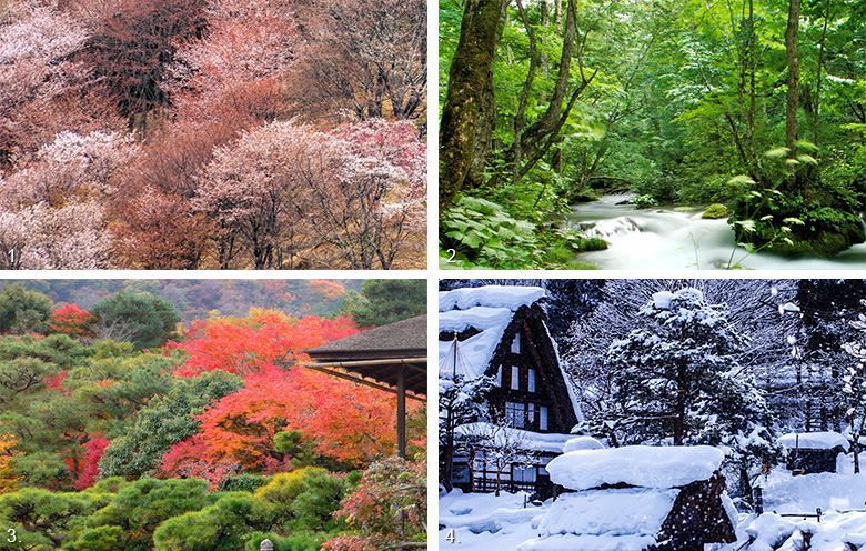 Japan's forests change with the seasons