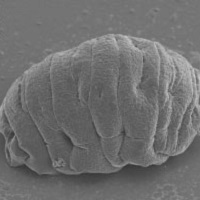 Demystifying the resilience of water bears