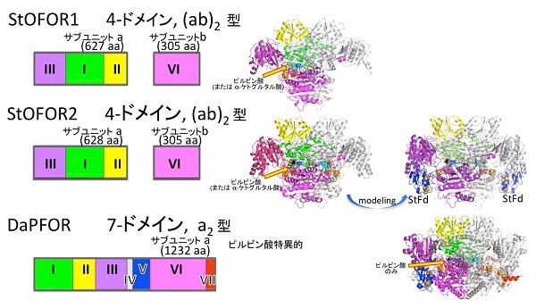 原始的な代謝で働く単純な酸化還元酵素のかたち                                 古い酵素から新しい薬への展望