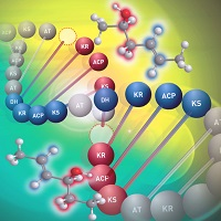 Genetic mechanism for structural diversification of natural ...
