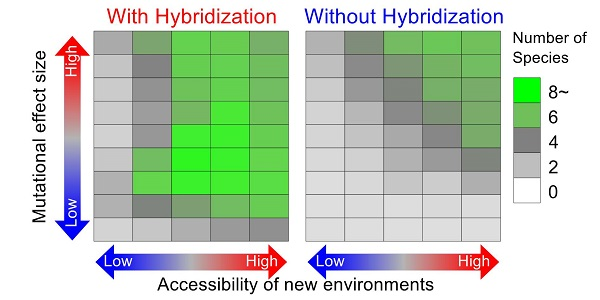 © 2018 Kotaro Kagawa.The effect of hybridization on species multiplication is assessed by comparing simulations with and without hybridization under various conditions. The vertical axis shows phenotypic effect size of mutations and the horizontal axis shows accessibility to new environments. When accessibility to new environments is low, a specific novel phenotype is necessary for organisms to invade a new environment. The squares' color indicates the number of species that have evolved by the 10,000th generation under each simulation condition (averaged across 30 simulation runs).