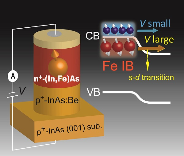 © 2018 Tanaka-Ohya Laboratory.In a spin Esaki diode consisting of an n-type ferromagnetic semiconductor indium iron arsenide (In,Fe)As and p-type indium arsenide (InAs), at left, the electrons participating in the current can be switched from the conduction band to the impurity band by bias voltage, at right, which yields a large change in magnitude and sign of the current response to the external magnetic field.