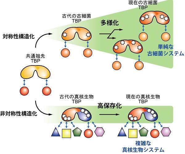 の 細胞 原核 真 細胞 と 違い 核