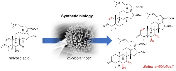 Artificial biosynthesis of steroid antibiotics