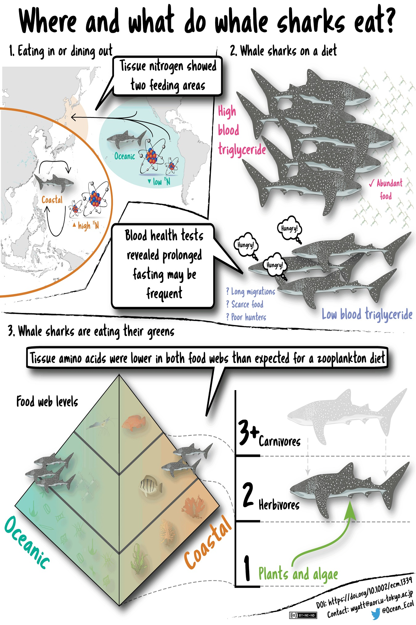 Cartoon showing whale shark migration maps and diet graphs.