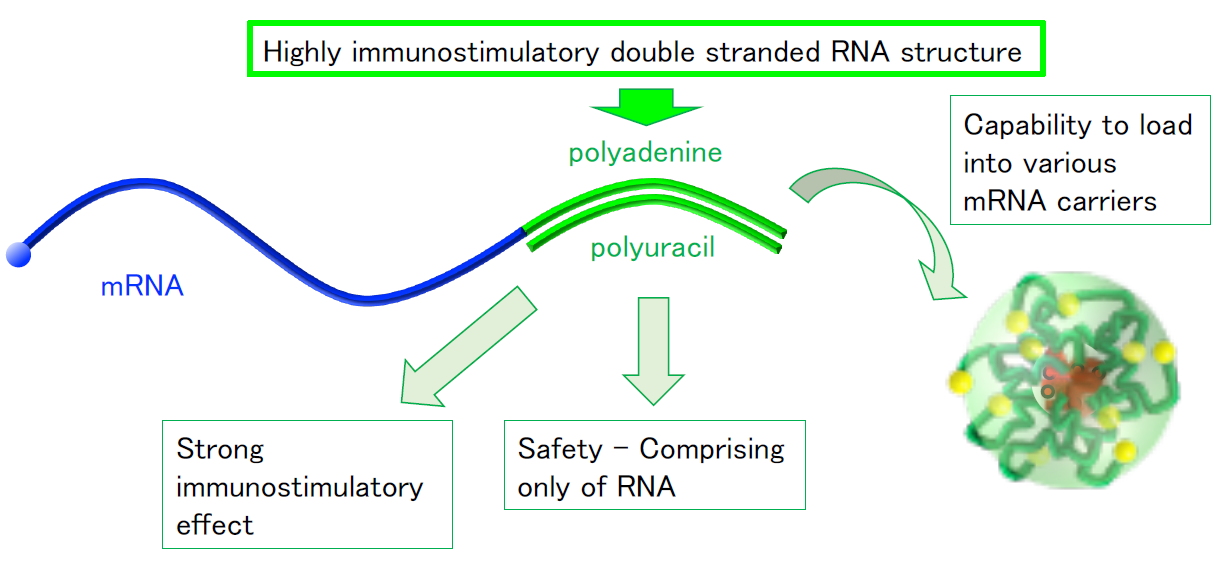 New, dual-function vaccine design                                 Messenger RNA alone trains immune system, boosts effectiveness