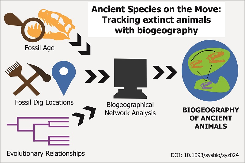 Cartoon schematic of the biogeographical analysis process.
