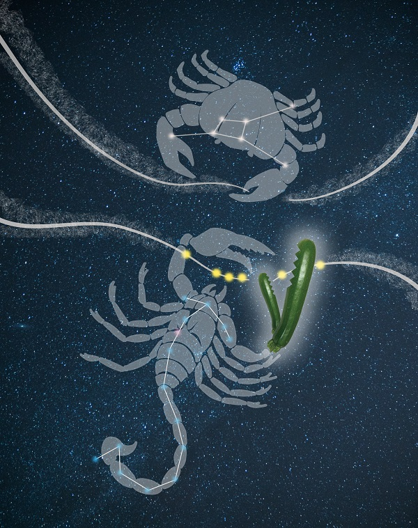 Cartoon of a crab and lobster constellation cutting strands of RNA.