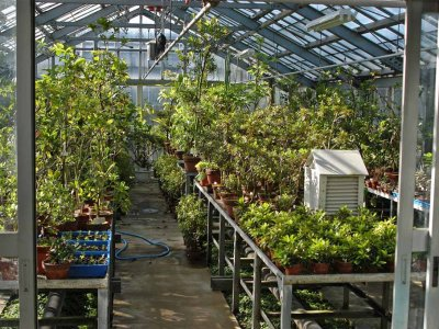 We maintain approximately 90 of the 125 endemic plant species of the Ogasawara Islands in our greenhouse.