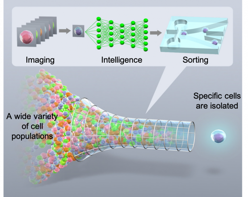 Overview of the Intelligent Image-Activated Cell Sorter