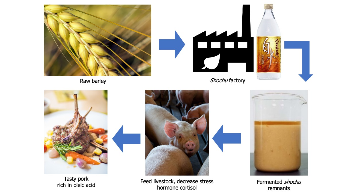 Flowchart showing 1) Raw barley, 2) Shochu factory, 3) Beaker of yellow-brown colored shochu remnants, 4) pink adolescent pig, and 5) cooked pork chop on a plate surrounded by roasted vegetables