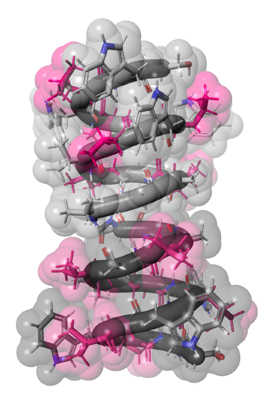 Space filling molecular model of gramicidin A with pink highlights on six amino acids.