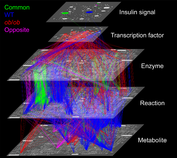 Five layers of regulatory networks for metabolism of healthy and obese mice.